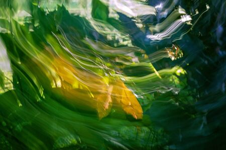 ICM - Intentional Camera Movement - a technique producing colourful out of focus backgrounds from plants with natural light, for use in projects and artwork