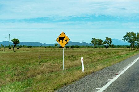 A warning sign using icons to show that cattle may cross the highway at any time