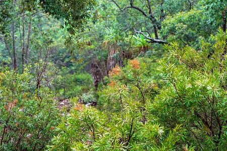 The greenery of the Australian bush on a rainy winter afternoon