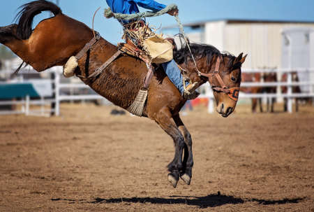 Cowboy rides bucking bronc horse at country rodeo