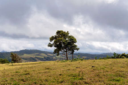 Trees blowing in the wind on top of a mountain overlooking a valley of dairy farming country