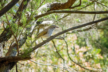 A tiny honeyeater bird perched on the branch of a tree against a naturally bright background