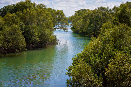 Thick mangrove habitat on the banks of a blue water river