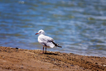 A seagull standing on a creek bank looking for food