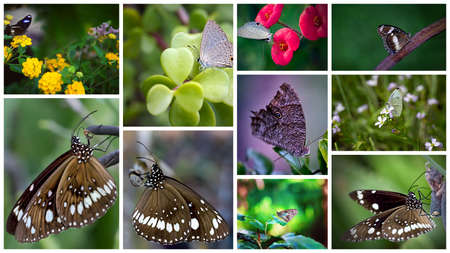 Collage of ten images in close up of a butterfly on a flower
