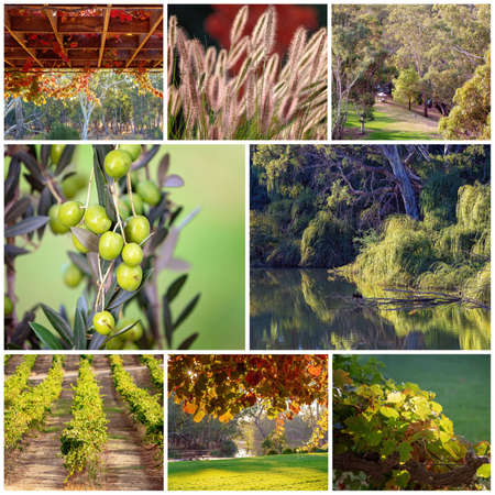 A collage of images including grape vines, a vineyard, grass, olives, landscapes and a cormorant drying his wings in a creek at dawn