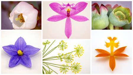 Collage of macro images of flowers on a light background Stok Fotoğraf