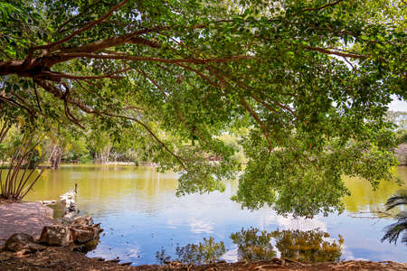 A swamp lake of green water with overhanging trees