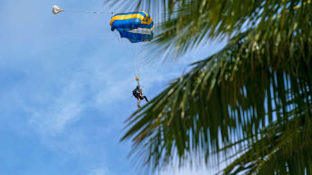 Airlie Beach, Queensland, Australia - February 2021: Tandem skydivers with parachute open coming into land, foreground of palm trees 新闻类图片
