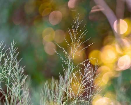 Wild grass with shallow depth of field and a colorful bokeh background