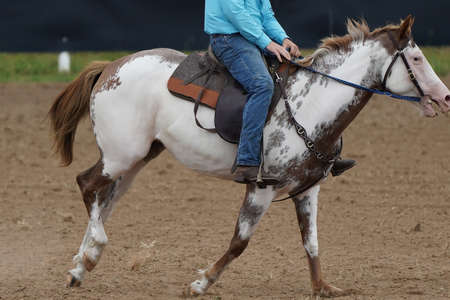 Close up of a horse being ridden by a cowboy in a rodeo event