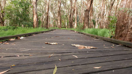 A timber walkway through a melaleuca wetlands forest