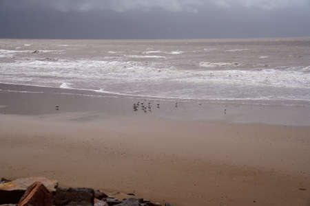 A flock of seagulls on the sand on a wet and windy day on the beach