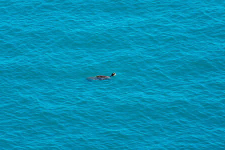 A turtle swimming under clear blue sea water with only its head visible