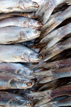 daurade: closeup of fish