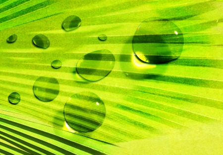 green leaf water drop it photo