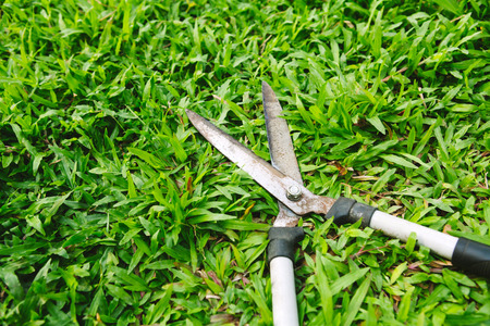 snipping: Scissors to cut the grass on green grass Stock Photo