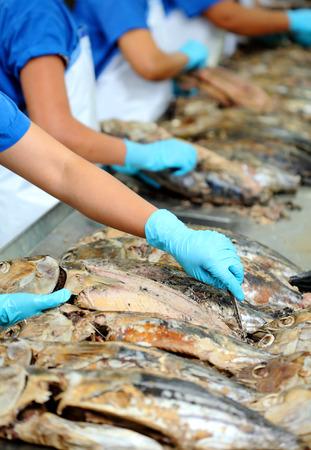 overfishing: the cutting of a tuna in factory, tuna processing