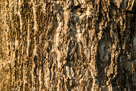 Detail of old wood tree texture background, wood skin Stock Photo
