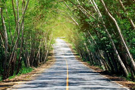 The mountain road is covered with trees in Tha Yang District, Phetchaburi Province, Thailand.