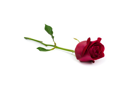 red flower: Red rose on white background