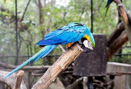 nibble: blue-and-yellow macaw (Ara ararauna) nibble log