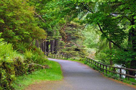 Walk in the forest - Glendalough, Ireland photo