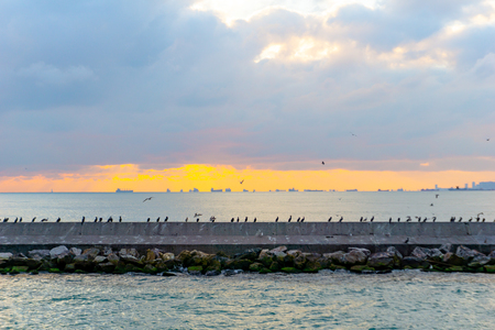 Sitting sea birds over the wall Stock Photo