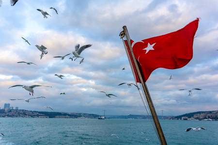 Waving turkish flag over the sea with seagulls flying