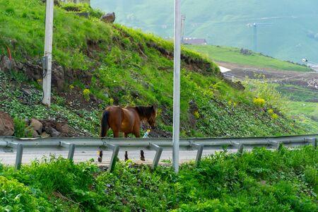 Chestnut horse standing on a asphalt road