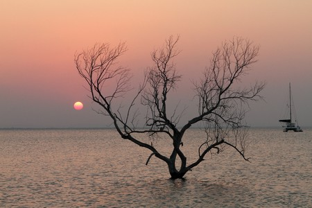 A beautiful tree standing in the water at sunset in the bay of Pemba in Mozambique