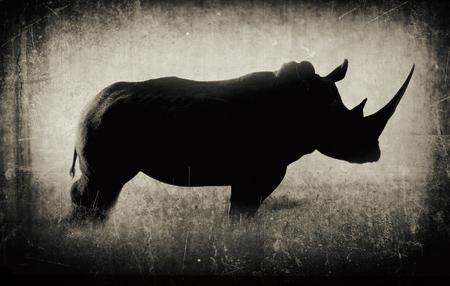 A black and white photo of a rare rhinoceros