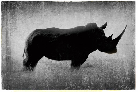 A black and white photo of a rhinoceros
