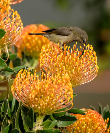 A bird drinking nectar from the flowers