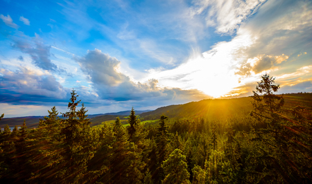 treetops: mountain forest landscape, the view from the treetops at sunset, the effect of sunlight - Central Europe,
