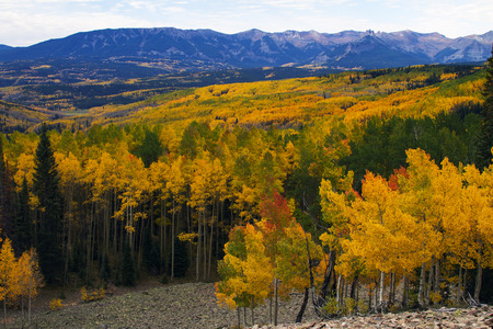 Fall Colors of Colorados Ohio Pass.  The aspen changing color during the Autumn Season in Colorado.