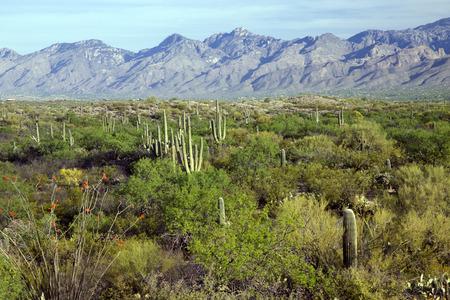 Landscape of the Sonoran Desert Near Tucson Arizona