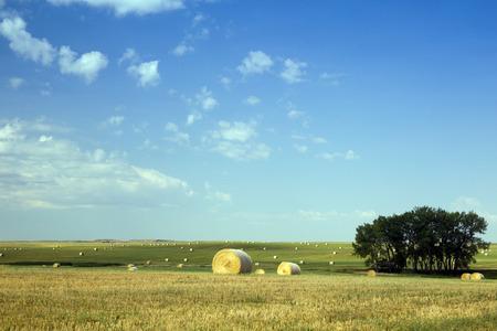 Hay Bales in Buffalo Gap Grasslands, South Dakota