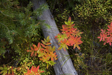 Yellowstone National Park Forest Floor in Autumn Colors