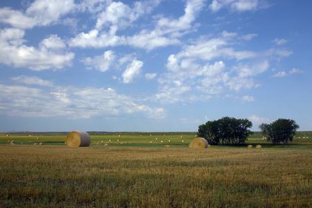 Eroding textures of the Badlands National Park South Dakota, Buffalo Gap Grasslands