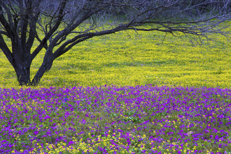 Texas Hill Country in Colorful Spring Bloom