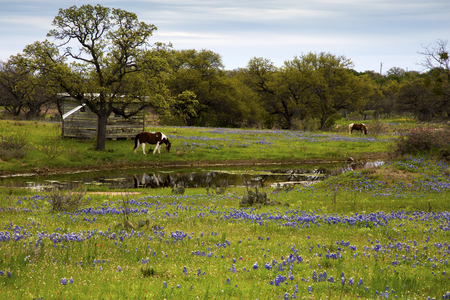 Horses in the Pasture Next to a Pond