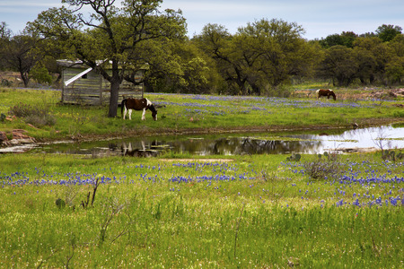 Horses in the Pasture Next to a Pond Stock Photo