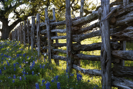 Old Woodon Fence and Bluebonnets on Willow City Loop Road, Texas Banque d'images - 122381198