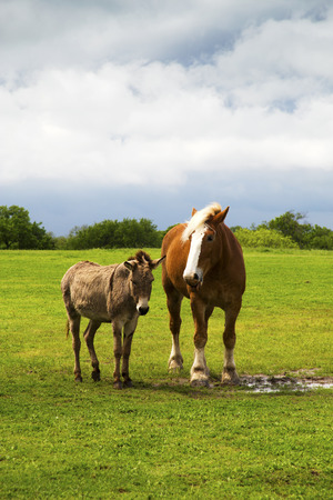 Horse and Donkey in a Pasture Near Ennis, Texas Stock fotó