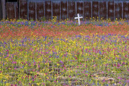San Antonio Area Springtime Wildflower Blooms, San Antonio,Texas