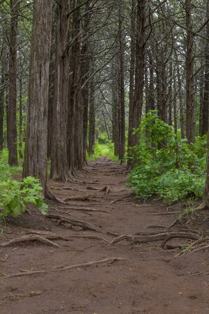 Pathway Through the Trees in the Parallel Forest, Whitchita Wildlife Refuge, Oklahoma.