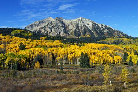 Colorful Autumn Colors on Kebler Pass Near Crested Butte, Colorado Stock fotó
