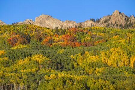 Autumn Colors on the Mountain on Kebler Pass, Crested Butte, Colorado. Stock fotó