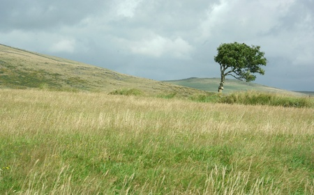 Windblown tree standing alone on hill